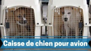 Les meilleures caisses et cages pour chiens comparatif avis et guide achat