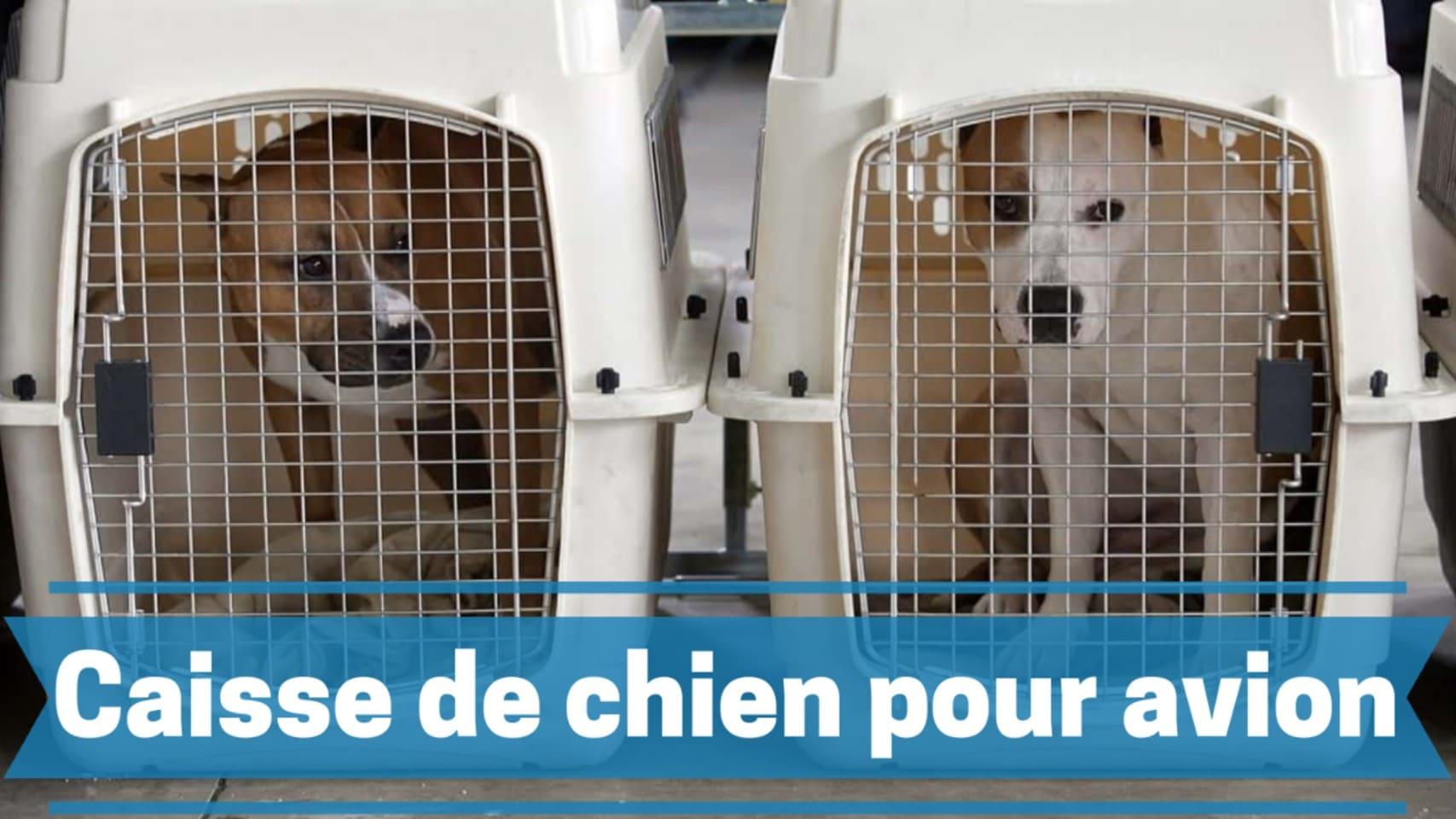 Photo de Les meilleures caisses et cages pour chiens et animaux de compagnie approuvées par les compagnies aériennes en 2020