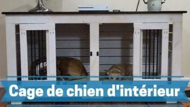 meilleurs caisses, cages et chenils pour chiens d'intérieur comparatif guide achat avis