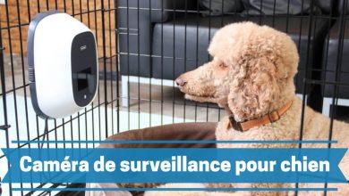 Photo de Les meilleures caméras de surveillance pour chien et autres animaux de compagnie en 2020