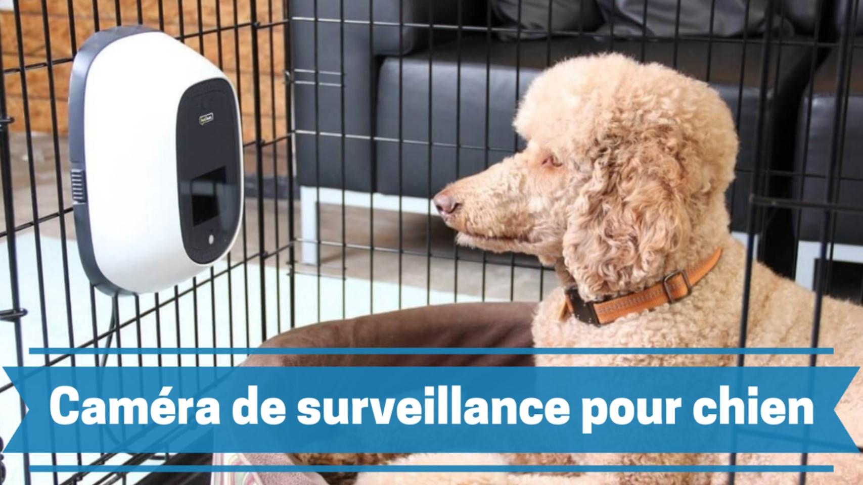Meilleure caméra de surveillance pour chien comparatif guide achat avis