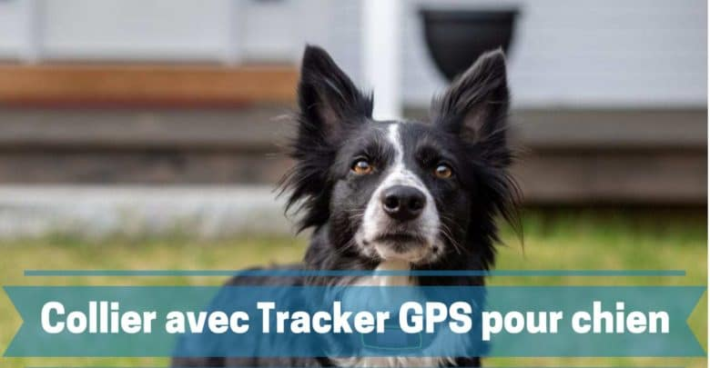 meilleur collier avec traceur outracker pour chien comparatif guide achat avis