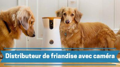Photo de Les meilleures caméras de surveillance pour chien avec distributeurs de friandises et croquettes en 2020