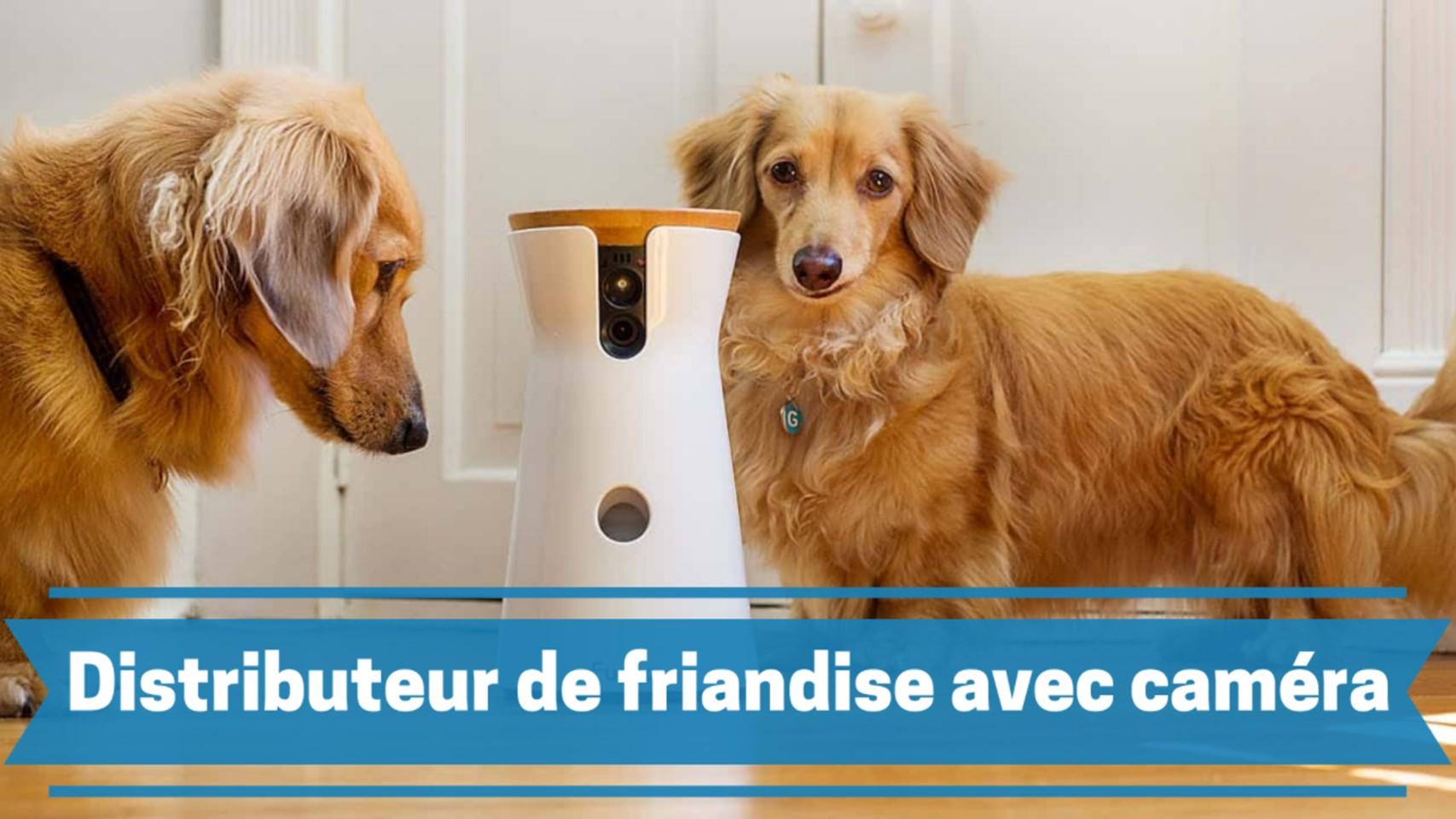 meilleur distributeur de friandise avec caméra pour chien comparatif guide achat avis