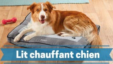 Photo de Les meilleurs lits et tapis pour chiens chauffants