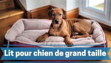 Photo de Les meilleurs lits et paniers XXL pour chiens de grande taille en 2020.