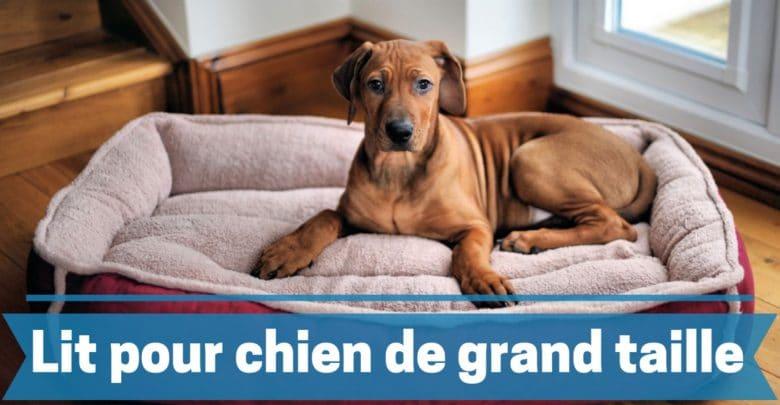 meilleur lit, cousin, panier pour chien de grande taille comparatif guide achat avis