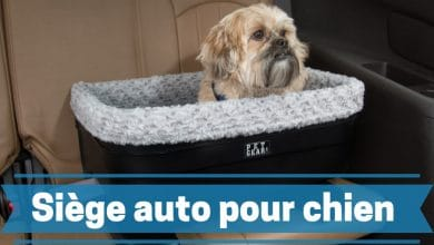 Photo de Meilleur siège auto pour chien en 2020