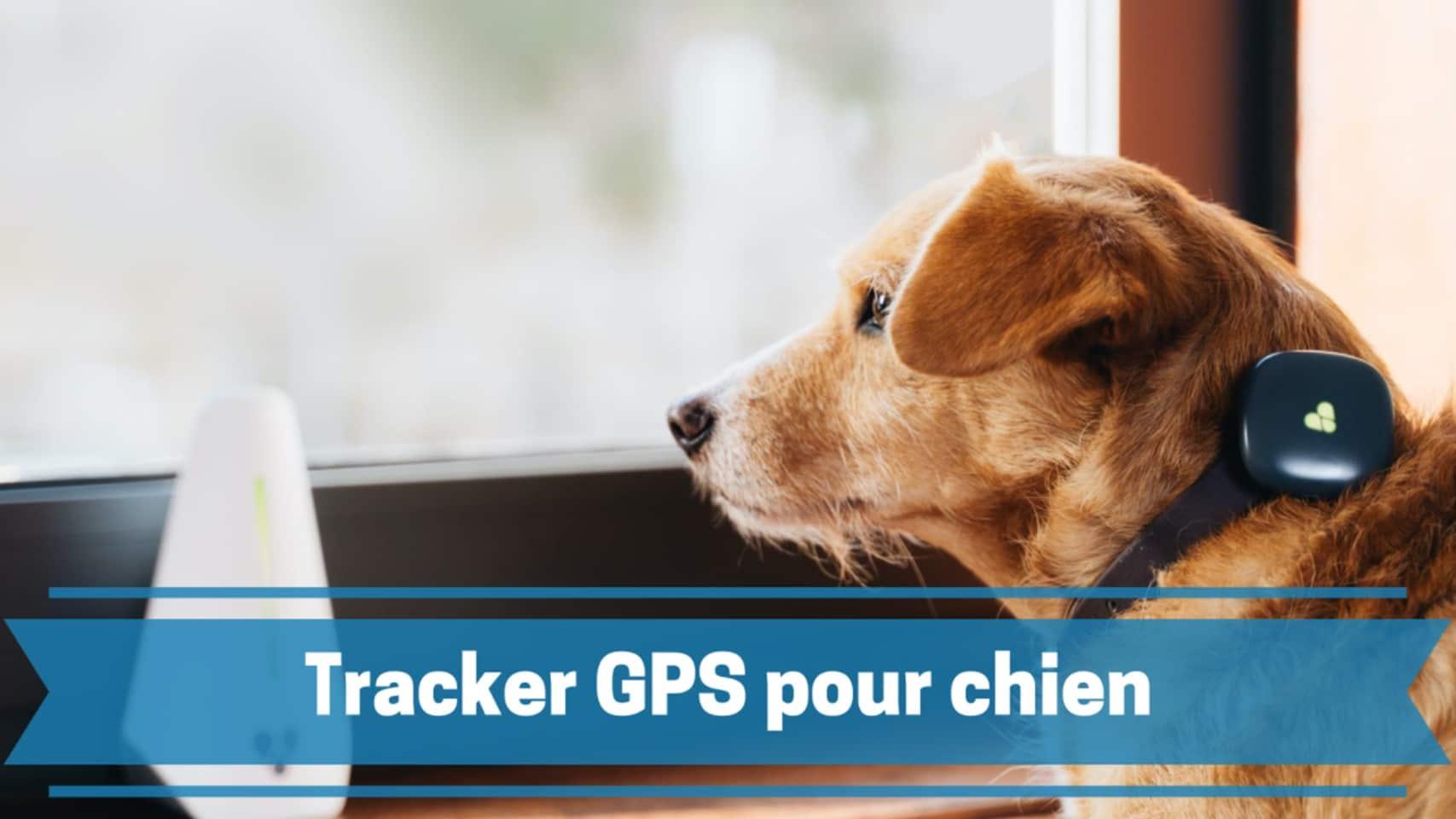 Photo de Meilleurs traceurs ou trackers GPS pour chien et autres animaux de compagnie en 2020