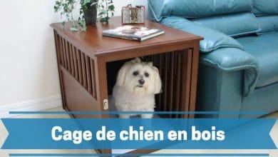 Photo de Alliez esthétique et durabilité avec les meilleures cages de chien en bois