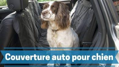 Photo de Les meilleures couvertures et housses de voiture pour chiens et animaux de compagnie en 2020