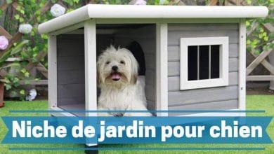 Photo de Les meilleurs niches extérieures de jardin pour chiens en 2020.