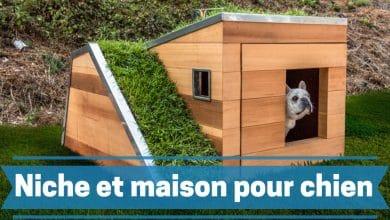 Photo de Mettre votre chien en sécurité en choisissant la meilleure niche pour chien